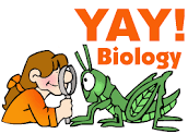 Yay Biology
