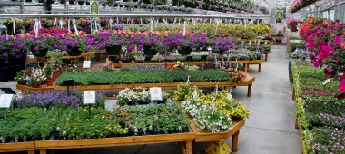 Sam Bridge Nursery & Greenhouses, LLC